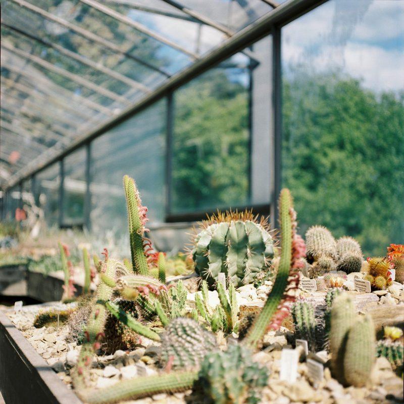 Hamburg Botanic Garden 2
